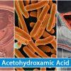 Acetohydroxamic Acid